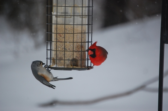 Toggling for seed! Photo by Michelene Cain