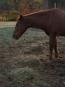 Horse NC